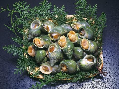 青つぶ貝(ボイル殻付)