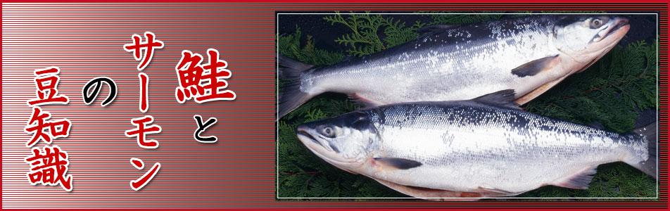 鮭とサーモン豆知識